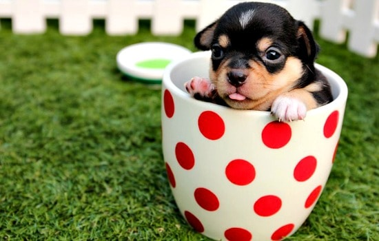 Surprising uses for hand sanitizer - Fend off vicious dogs