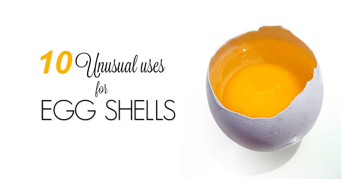 10 Unusual Uses For Eggshells Housewife How To S 174