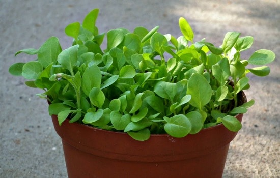 How to save money gardening - Look for multiple plants in a pot