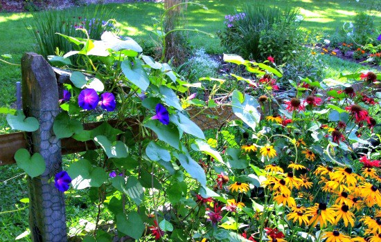 How to save money gardening - Six tips to spend less