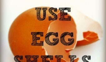 10 Unusual Uses For Eggshells
