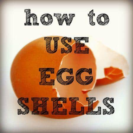 How to use egg shells from HousewifeHowTos.com