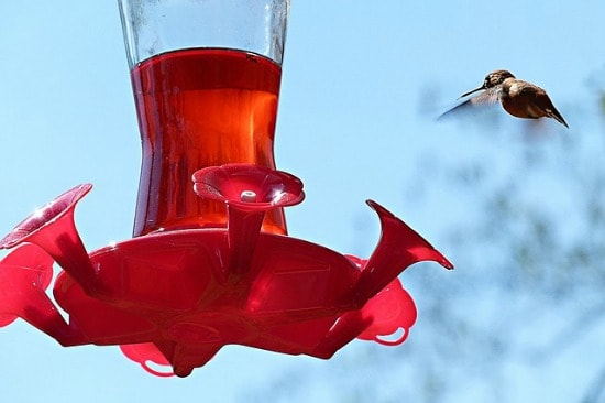 Unusual uses for eggshells - Clean hummingbird feeders