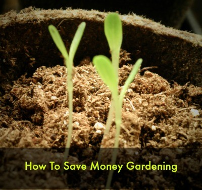 How to save money gardening from HousewifeHowTos.com