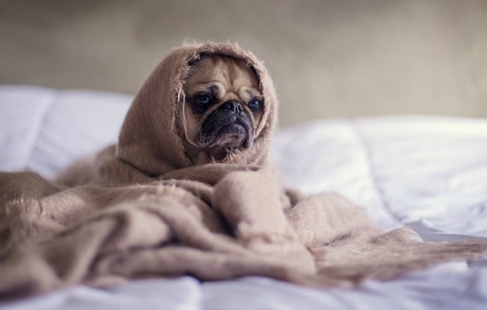 How to reduce dust in your home - Keep your bedding clean