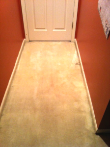 How to Get Dried Paint out of Carpet - Iron to one side of photo shows that the stain is gone
