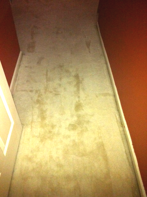 Removing dried stains from carpet from HousewifeHowTos.com