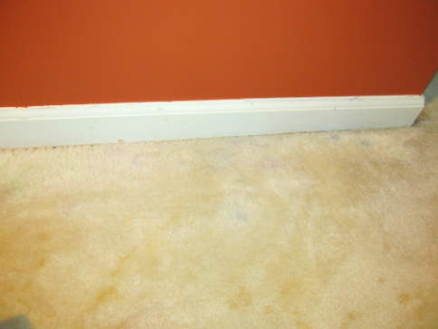 how to get dried paint out of carpet along with other stubborn stains