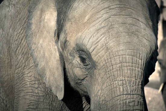 Stop household clutter the same way you would eat an elephant