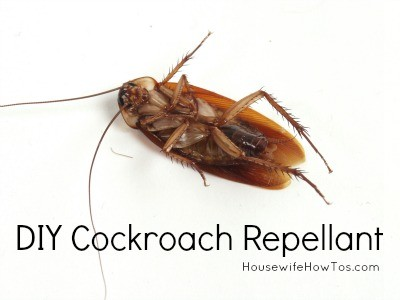 How To Get Rid Of Cockroaches Naturally from HousewifeHowTos