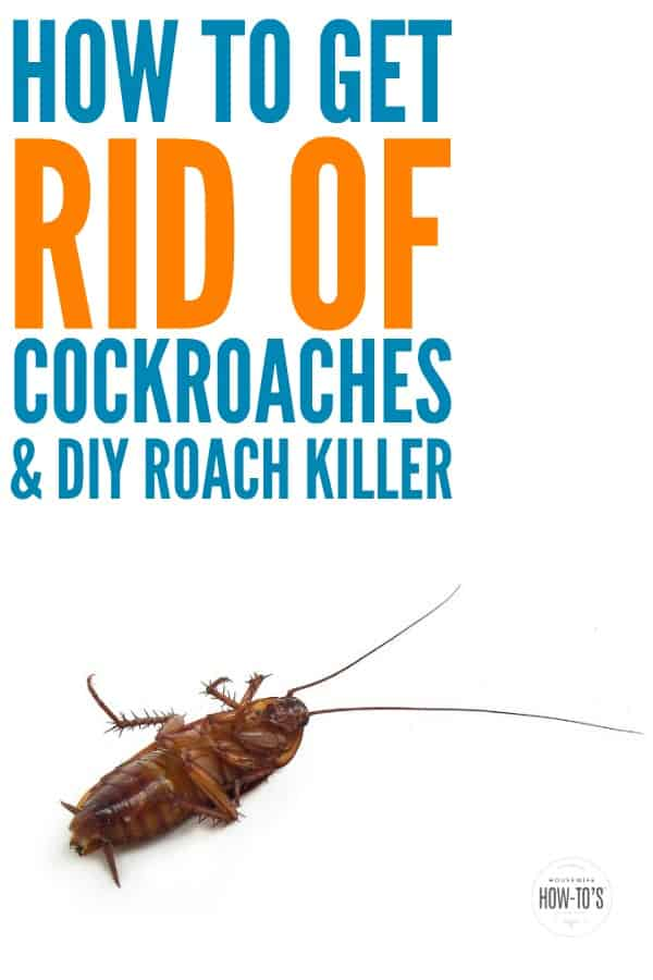 How to Get Rid of Cockroaches & DIY Natural Roach Killer - Follow these steps to rid your home of these disease-carrying pests and keep them away for good. #cockroaches #naturalpestcontrol #pestcontrol #diypestcontrol #roaches #pests #cleaning
