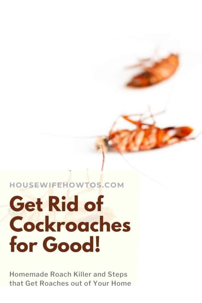 How to Get rid of Cockroaches for Good 1