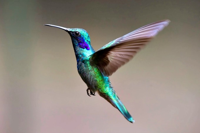 photo about Printable Hummingbird Nectar Recipe referred to as How in direction of Entice Hummingbirds in the direction of your Backyard and Preserve Them Fed