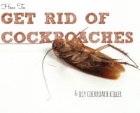 How To Get Rid Of Cockroaches (and DIY Roach Killer)