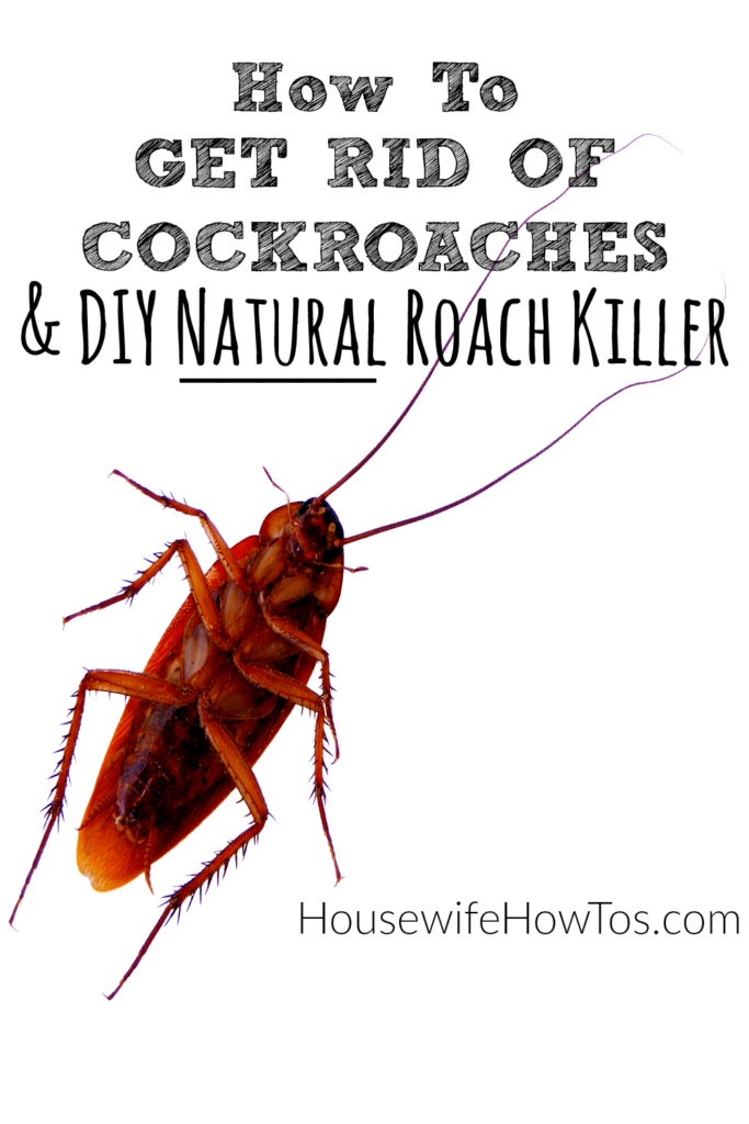 How Can I Get Rid Of Cockroaches Naturally
