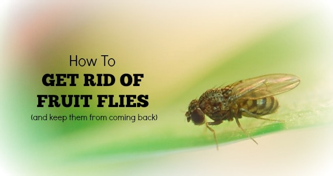 types of fruit kill fruit flies