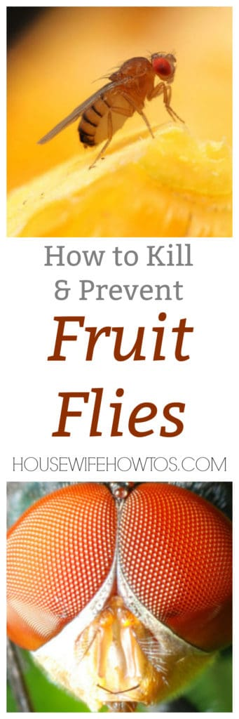 how to kill fruit flies and prevent them too housewife how to 39 s. Black Bedroom Furniture Sets. Home Design Ideas