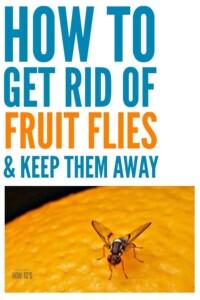 How to Kill Fruit Flies and Keep them Away #fruitflies #householdpests #naturalpestcontrol #pests #flies #bugs
