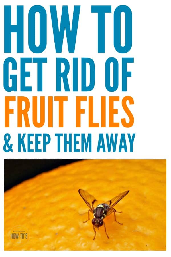 How To Kill Fruit Flies And Get Rid Of Them For Good