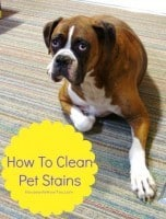 How To Clean Pet Stains from HousewifeHowTos.com
