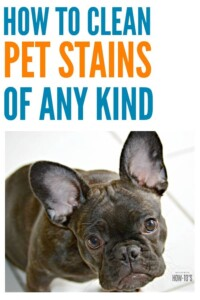 How to Clean Pet Stains #stainremoval #carpetcleaning #stains #carpetstains #cleaning #howtoclean #cleaningtips #cleaningadvice #floorcare #pets #dogs #cats