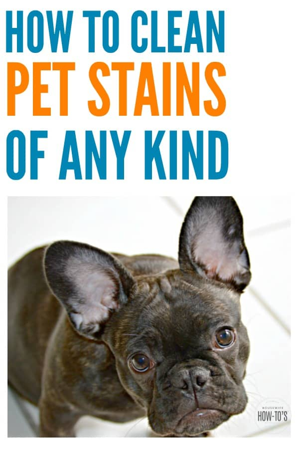 How to Clean Pet Stains #stainremoval #stains #carpetstains #cleaning #deepcleaning #springcleaning #homemaking #pets #dogs #cats