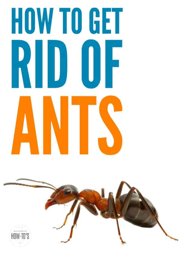How to Get Rid of Ants - Gets rid of them in the house and outdoors, too. #ants #pests #naturalpestcontrol #pestcontrol #blackants #redants #houseants #bugs #householdpests #cleaning