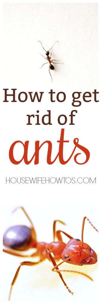 How To Get Rid Of Ants And Keep Them Away For Good