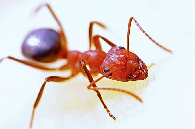 how to kill ants naturally indoors