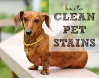 How To Clean Pet Stains