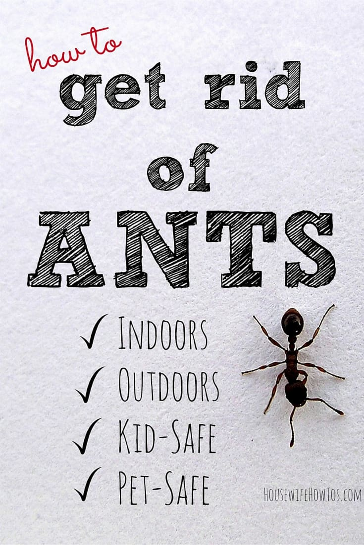 Pin How To Get Rid Of Ants