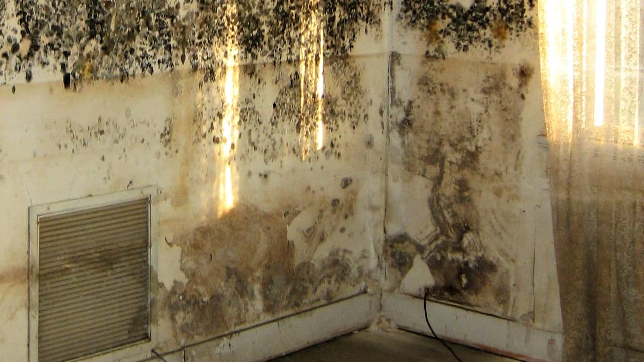 How To Get Rid Of Black Mold On Walls getting rid of mold in basement