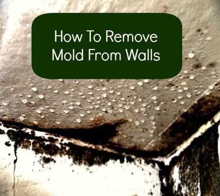 How to remove mold from walls from HousewifeHowTos.com