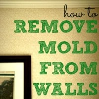 how to get rid of green mold on wood