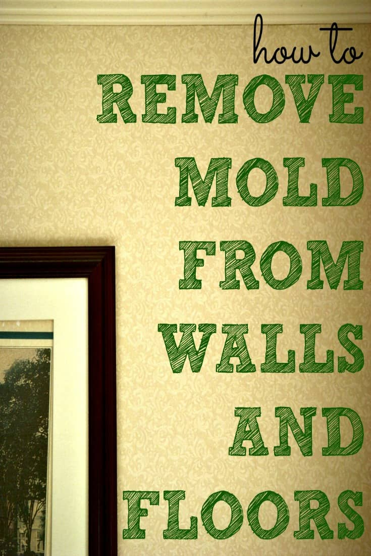 Great tips and DIY cleaning recipes to remove mold from walls and other surfaces!
