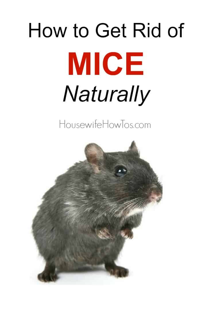 How To Rid Mice Naturally