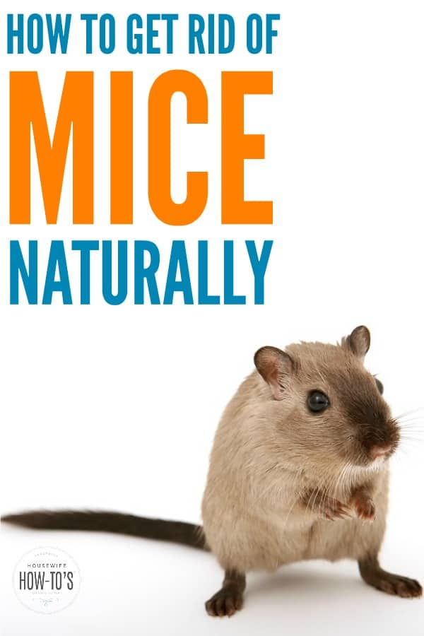How to Get Rid of Mice Naturally - Just about every house gets invaded by a mouse at one point. Here is how to get rid of mice naturally using kid- and pet-safe methods then keep them away for good. #mice #mouse #householdpest #naturalpestcontrol #cleaning