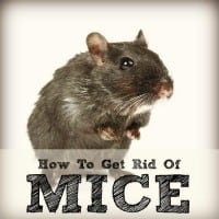 How to get rid of mice from HousewifeHowTos.com