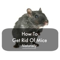How to get rid of mice naturally from HousewifeHowTos.com