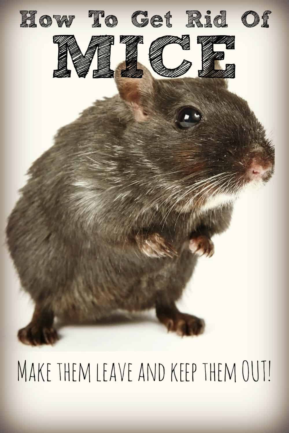 Get rid of mice naturally and keep them away mice in the home can ruin your electrical wiring damage your furnishings eat your ccuart Gallery
