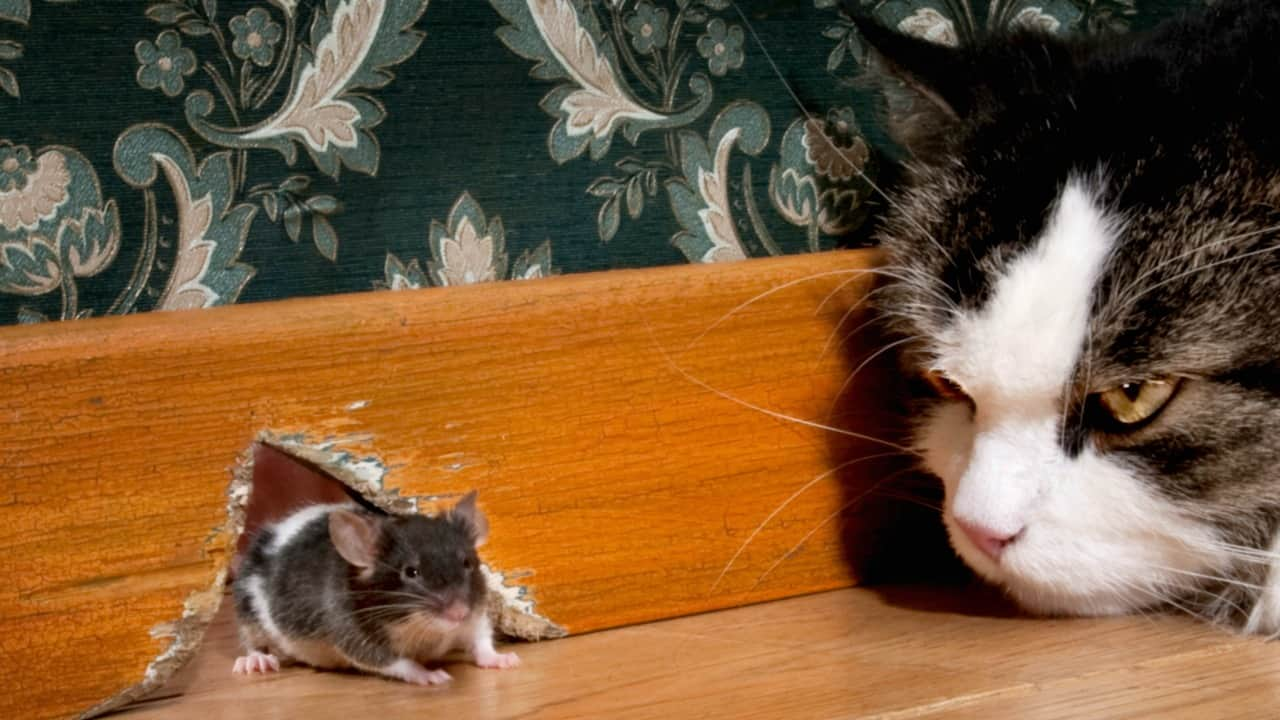 How to Get Rid of Mice Naturally and Keep Them Away for Good