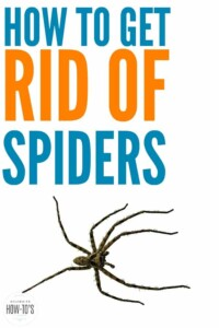 How to Get Rid of Spiders - My house used to get big ugly spiders all the time but this worked