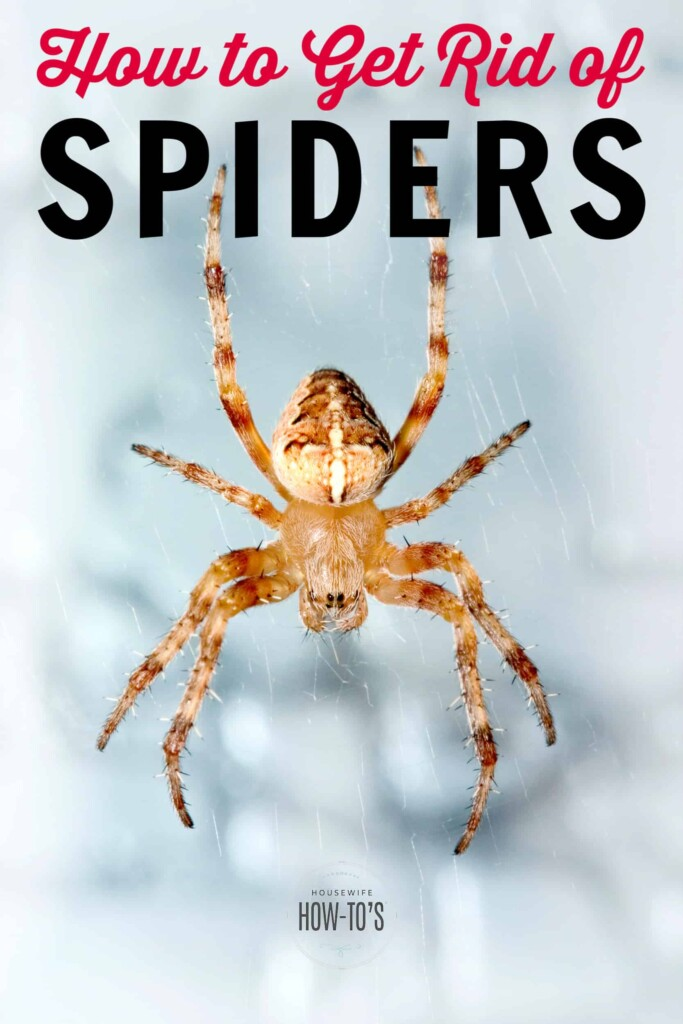 How to Get Rid of Spiders and Homemade Spider Spray