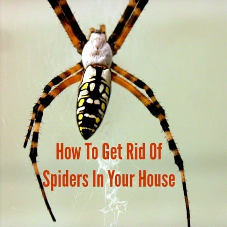How to get rid of spiders from HousewifeHowTos