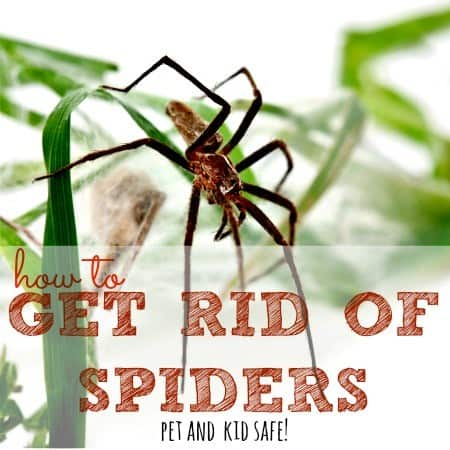 How to get rid of spiders in your home from HousewifeHowTos.com