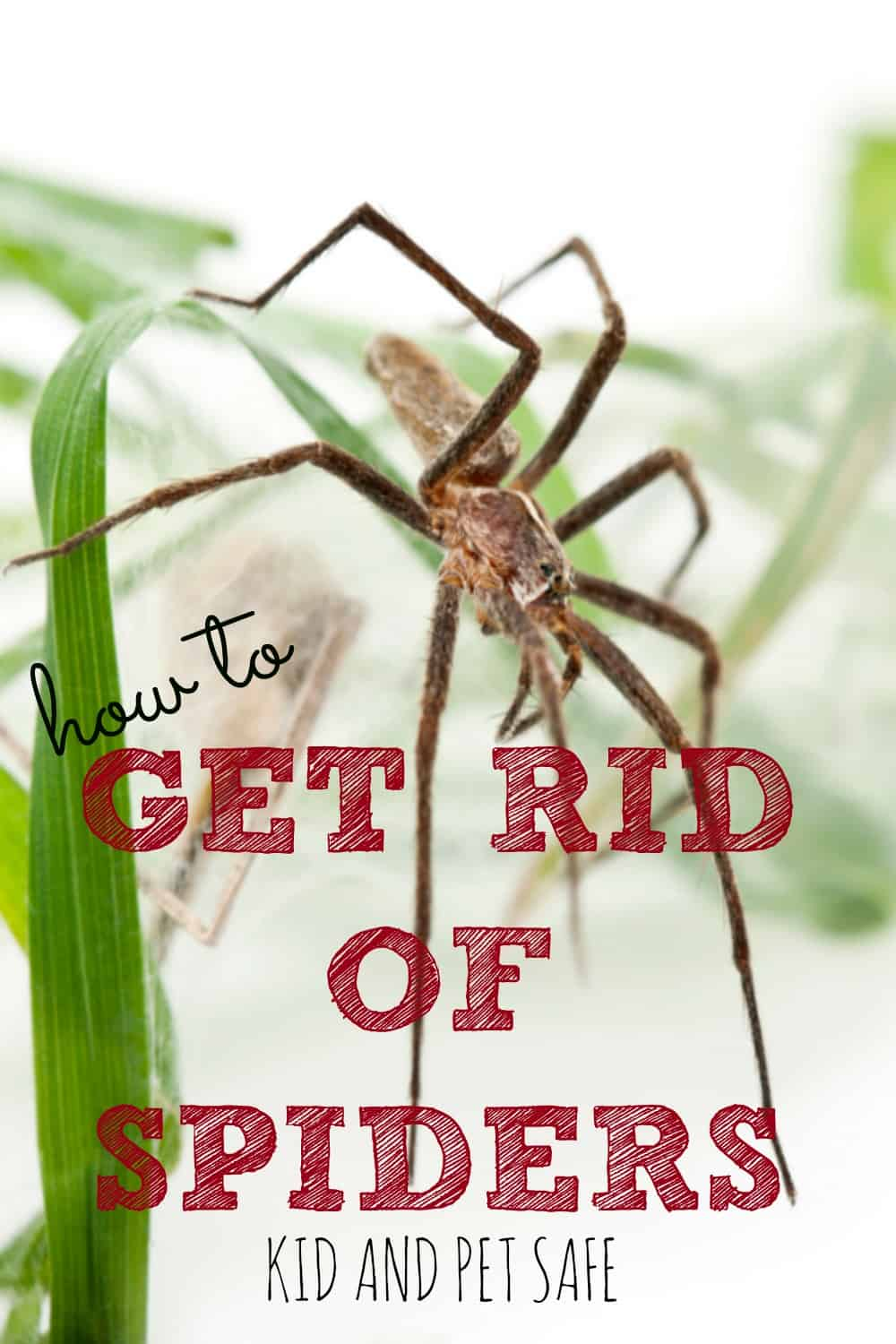 how to get rid of spiders in your home housewife how to u0027s