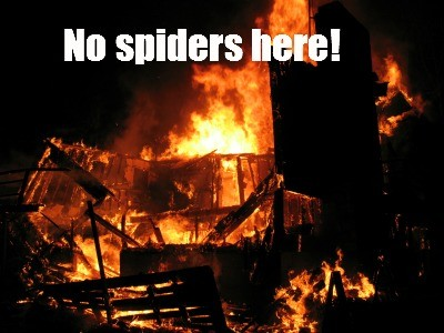 Ways to get rid of spiders from HousewifeHowTos.com