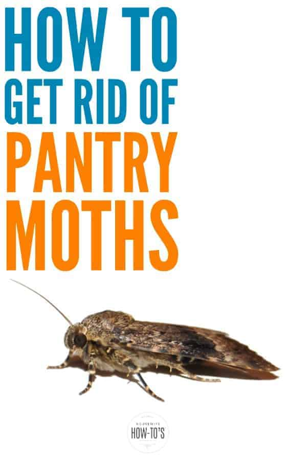 How To Get Rid Of Pantry Moths Pantrymoths Pestcontrol Naturalpestcontrol