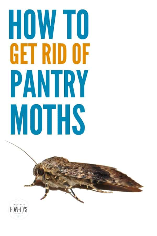 How To Get Rid Of Pantry Moths Keep Them From Returning