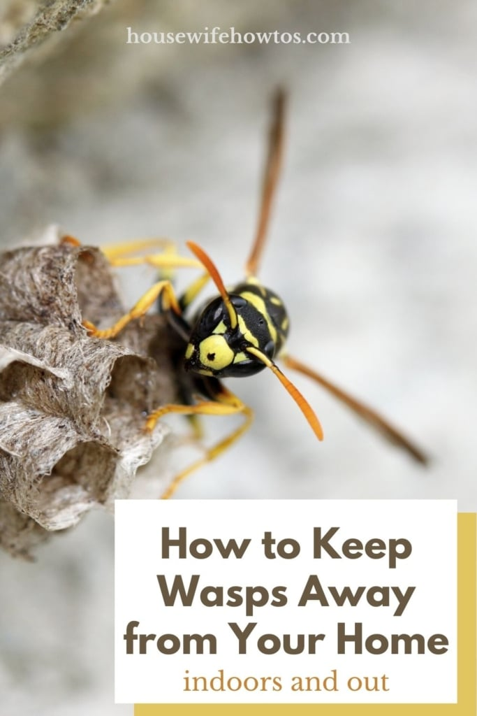How to Keep Wasps Away from Your Home, Pool, and Deck - Pin